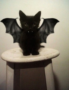 cat bat