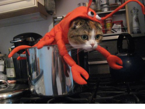 cat lobster